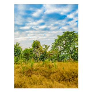 Postal Escena tropical del paisaje del prado, Guayaquil