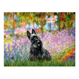 Postal Escocés Terrier 2 - jardín