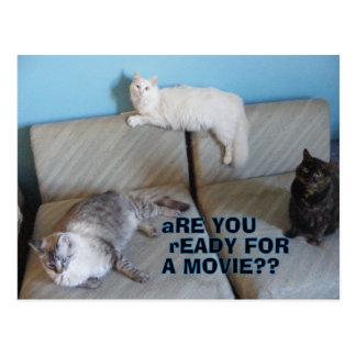 Postal especial de tres gatitos