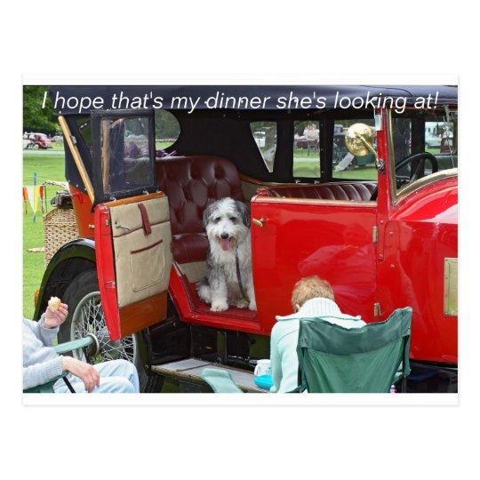 Postal Espero que es mi cena que ella está mirando…