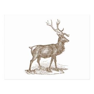 Postal Estilo de la prensa de copiar del ciervo mula del
