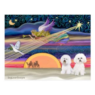 Postal Estrella del navidad - Bichon Frise (dos)