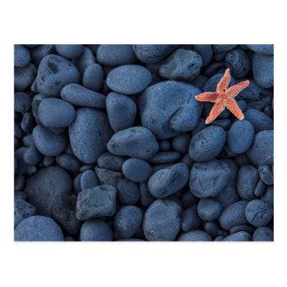 Postal Estrellas de mar en rocas negras a lo largo de la