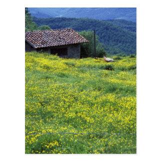 Postal Europa, Italia, Toscana, Siena, Chianti.