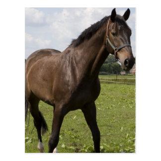 Postal excelente del caballo