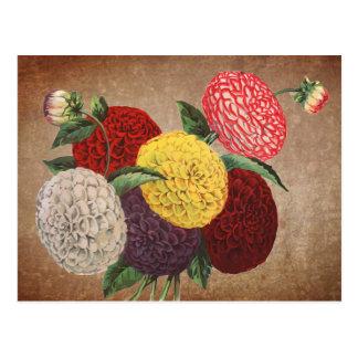 Postal Exhibición del crisantemo del estilo del vintage