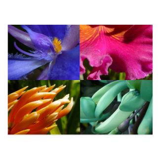 Postal exótica de las floraciones