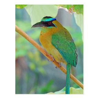 Postal exótica del pájaro
