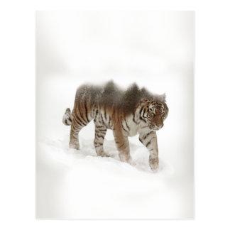 Postal Exposición-fauna tigre-Tigre-doble siberiana