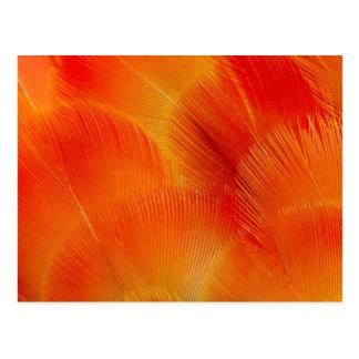 Postal Extracto anaranjado de la pluma del Macaw de