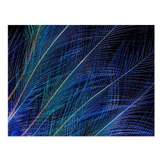 Postal Extracto azul de la pluma de ave del paraíso
