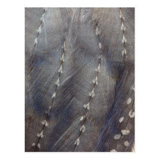 Postal Extracto gris de la pluma de Guineafowl