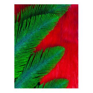 Postal Extracto rojo y verde de la pluma