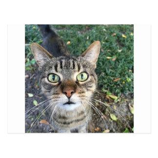 "Postal ""Ey usted"" dice este gato"