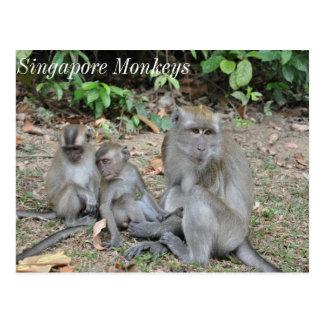Postal Familia del mono de Singapur