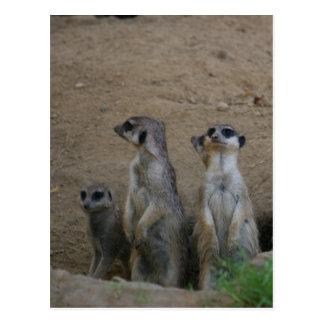 Postal Familia linda de Meerkat que dice hola