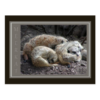 Postal Fauna de Meerkat