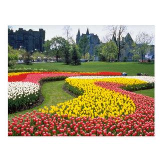 Postal Festival canadiense rojo del tulipán, parque