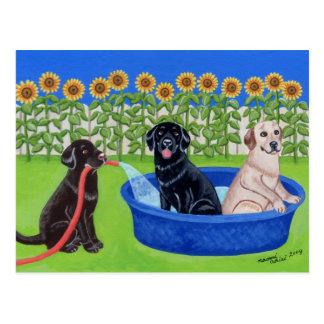 Postal Fiesta en la piscina divertida Labradors