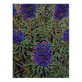 Postal Filas de la planta púrpura Del Mar de la lavanda