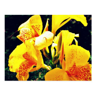 Postal Flor amarilla