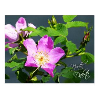 Postal Flor de estado de Dakota del Norte: Pradera