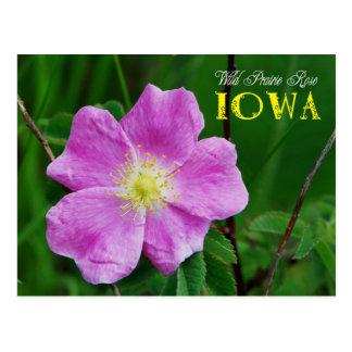 Postal Flor de estado de Iowa: Pradera salvaje subió