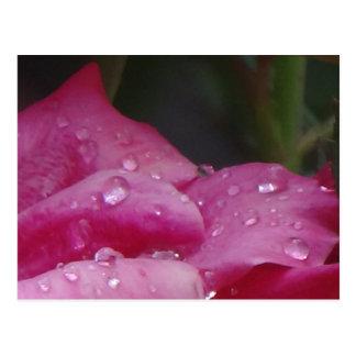 Postal Flor de la gota de lluvia