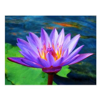 Postal Flor de Lotus