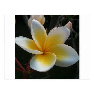 Postal flor de Tailandia