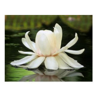 Postal Flor del lirio de agua del Amazonas (Victoria