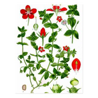 Postal Flor delicada hermosa de la primavera roja