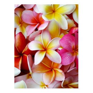 Postal Flor mezclada blanca amarilla rosada del Plumeria