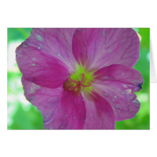Postal flor pink amarilla de caza, en blanco