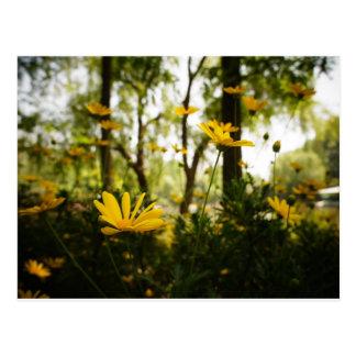 Postal Flor Postcard_01