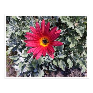 Postal Flor pura naturaleza