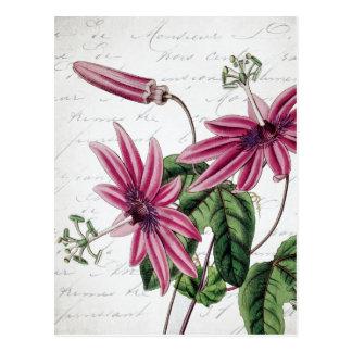 Postal Flor púrpura botánica de la pasión del vintage