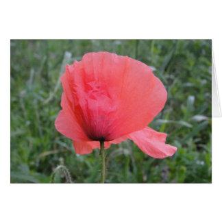 Postal flor roja de amapola: a have happy day tarjeta de felicitación