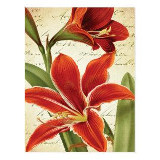 Postal Flor roja del navidad del Amaryllis botánica