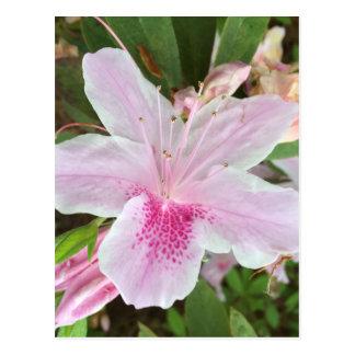 Postal Flor rosa clara