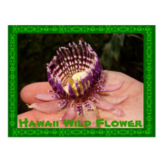 Postal Flor salvaje de Hawaii