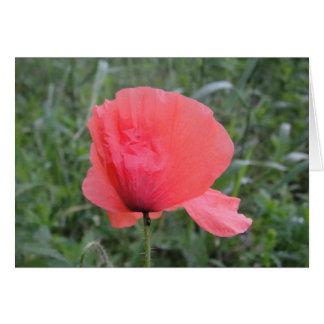 Postal flor tierna de amapola tarjeta de felicitación