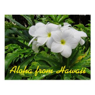 Postal Flor tropical del Plumeria blanco de Hawaii de la