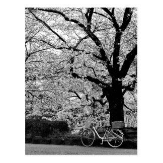 Postal Flor y bicicleta: Japón