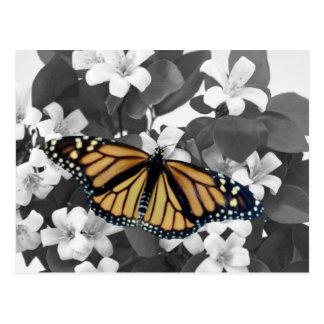 Postal Flor y monarca