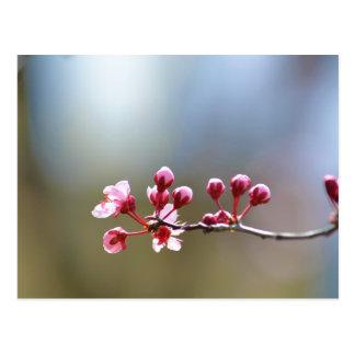 Postal Floraciones de la primavera