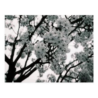 Postal Floraciones negras y blancas