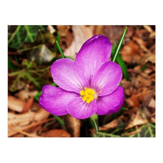 Postal floral