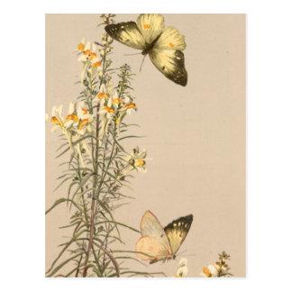 Postal Floral blanco del amarillo blanco negro de la