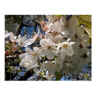 Postal floral de la foto con las flores blancas